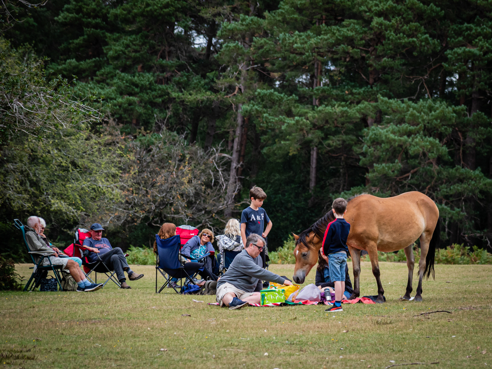 Gatecrashing New Forest picnic