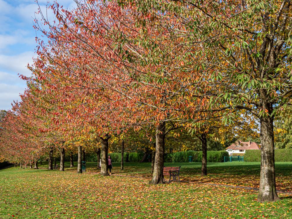 Stanney Fields 3
